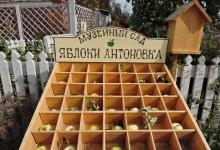 yabloki-afhazava-09
